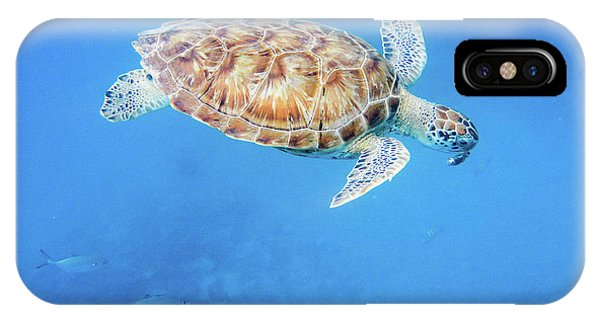 Sea Turtle And Fish Swimming IPhone Case