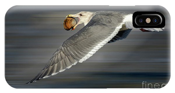 iPhone Case - Seagull In Flight by Bob Christopher