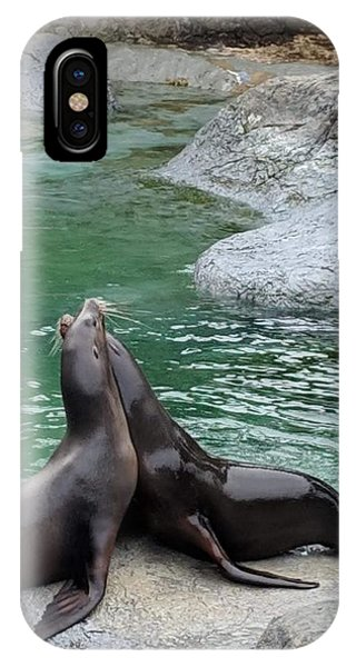 Water iPhone Case - Seal by Aswini Moraikat Surendran