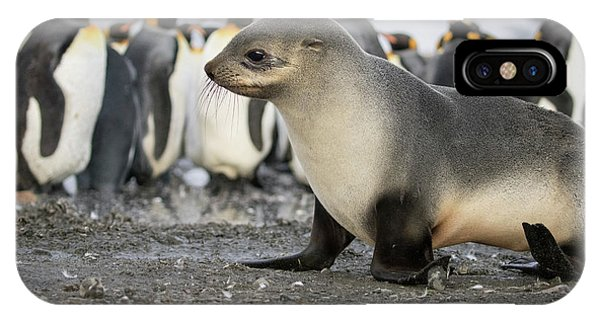 Seal Pup With King Penguins On Beach Phone Case by Tom Norring