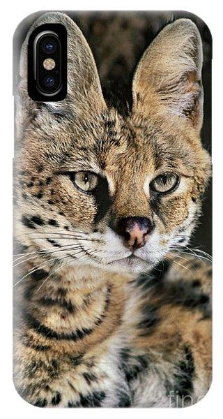Serval Portrait Wildlife Rescue IPhone Case
