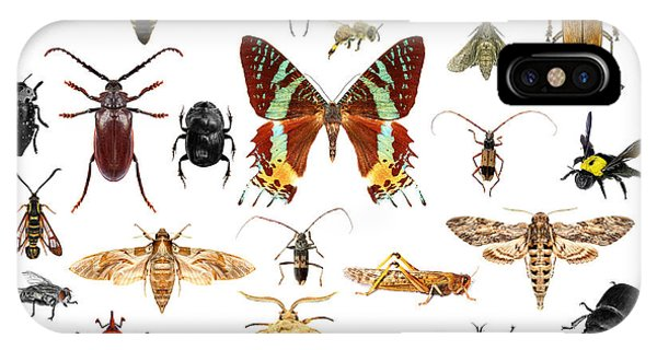 Bee iPhone X Case - Set Of Insects On White Background by Protasov An