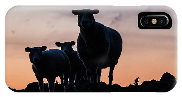 IPhone Case featuring the photograph Sheep Family by Anjo Ten Kate