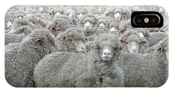 Sheep Looking Phone Case by Lee Torrens
