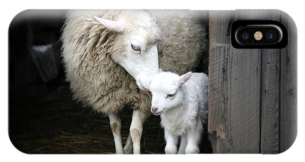 Equal iPhone Case - Sheep With A Lamb Standing In The by Katarzyna Mazurowska