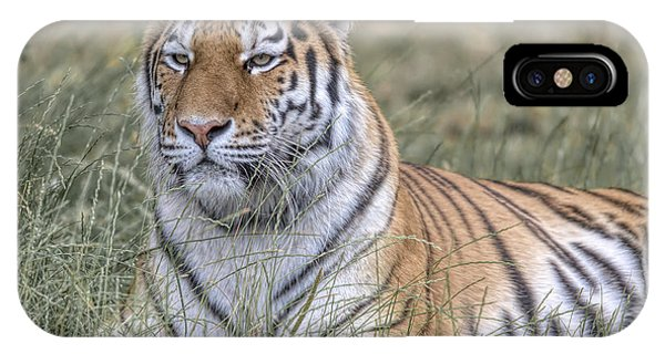 Shere Khan IPhone Case