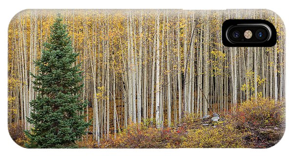 Shimmering Aspens IPhone Case