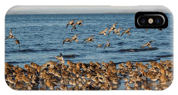 Shorebirds, Spring Migration Stop Phone Case by Ken Archer