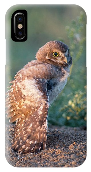 Shy Young Burrowing Owl IPhone Case