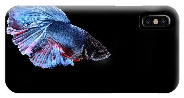 Half Moon iPhone Case - Siamese Fighting Fish by Bausriyosthiya