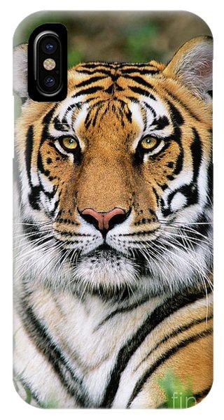 Siberian Tiger Staring Endangered Species Wildlife Rescue IPhone Case