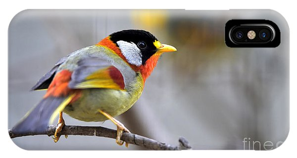 For iPhone Case - Silver-eared Mesia by Wang Liqiang