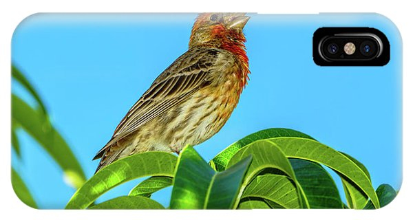 Singing House Finch IPhone Case