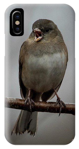 Singing Junco 1 IPhone Case