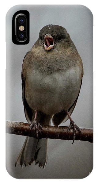 Singing Junco 2 IPhone Case