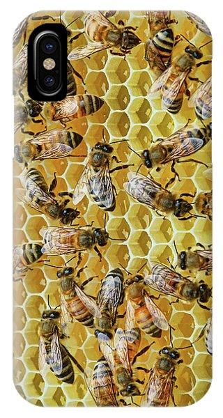 Honeybee iPhone X Case - Sisters by Nikolyn McDonald