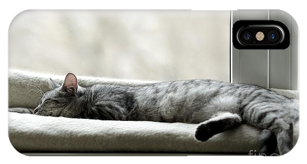 Grey Background iPhone Case - Sleeping Cat Near Window On Sunny Day by Renata Apanaviciene