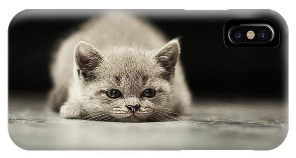 Purebred iPhone Case - Sleepy British Kitten Over Black by Belovodchenko Anton