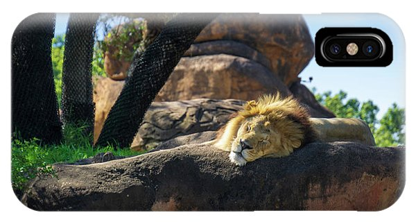 Sleepy Lion IPhone Case