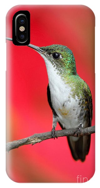 Small iPhone Case - Small Himmngbird Andean Emerald Sitting by Ondrej Prosicky