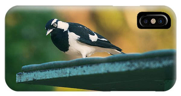 Small Magpie Lark Outside In The Afternoon IPhone Case