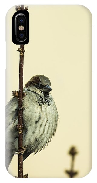 Small iPhone Case - Small Passerine Bird Sitting On The by Martin Janca