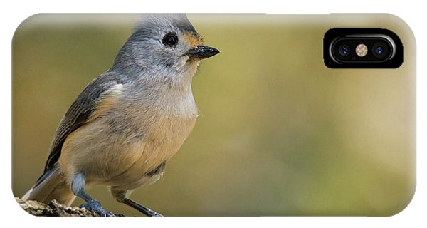 Small Titmouse IPhone Case