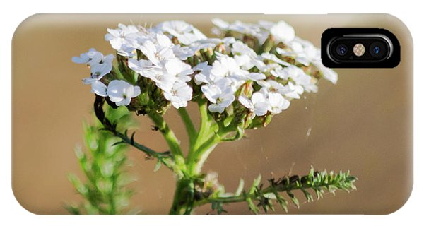 IPhone Case featuring the photograph Small White Flowers by Scott Lyons