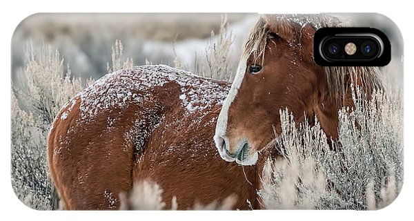 Snow Dusted Mustang Stallion IPhone Case