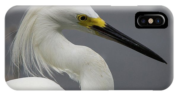 Snow Egret Portrait IPhone Case