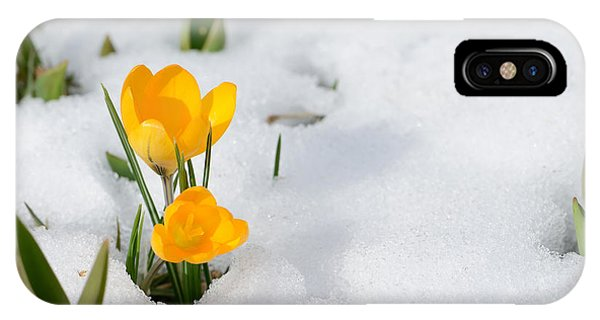 Strength iPhone Case - Snowdrops Crocus Flowers In The Snow by Er 09