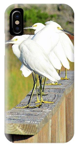 Snowy Egrets Eyeballing A Marsh On Jekyll Island IPhone Case