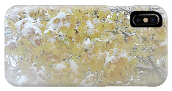 IPhone Case featuring the photograph Snowy Maple by PJ Boylan