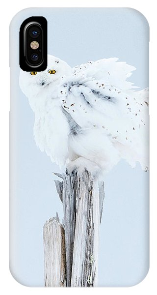 Snowy Owl Feather Shake IPhone Case