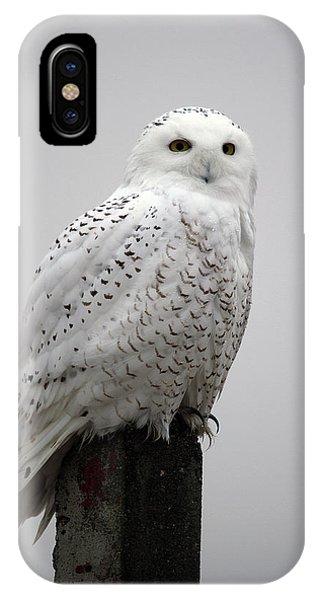 Snowy Owl In Fog IPhone Case