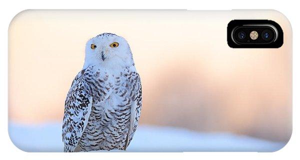 Fair iPhone Case - Snowy Owl, Nyctea Scandiaca, Rare Bird by Ondrej Prosicky