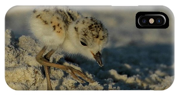 Snowy Plover On The Hunt IPhone Case