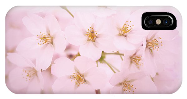 Soft Cherry Blossoms IPhone Case