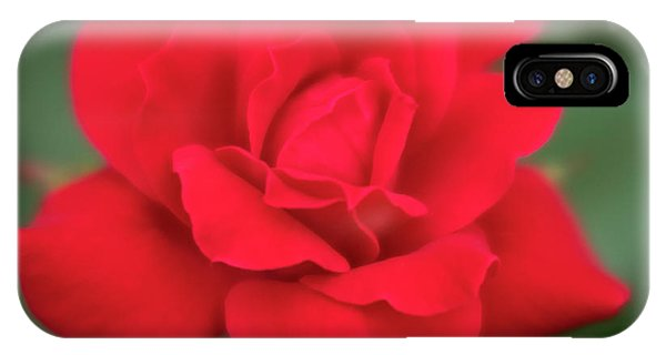 Soft Red Rose IPhone Case