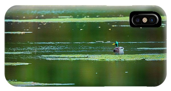 IPhone Case featuring the photograph Solitary Mallard Drake by Edward Peterson