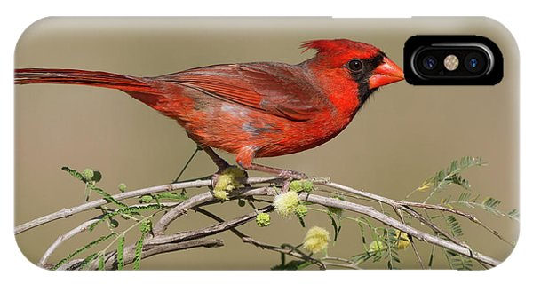South Texas Cardinal IPhone Case