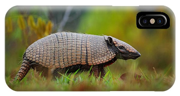 Claws iPhone Case - Southern Naked-tailed Armadillo by Ondrej Prosicky