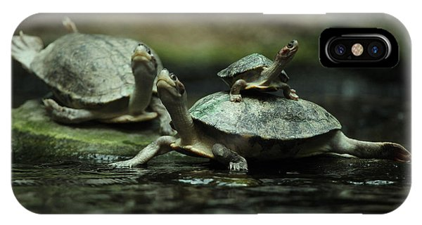 Young iPhone Case - Southern River Terrapin Batagur by Vladimir Wrangel