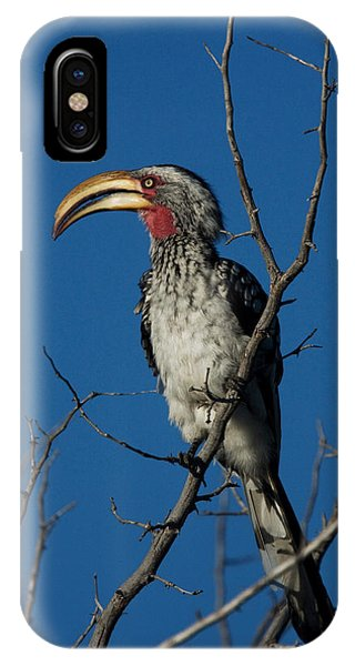 Southern Yellow-billed Hornbill Phone Case by David Hosking