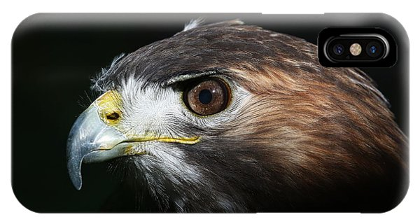 IPhone Case featuring the photograph Sparkle In The Eye - Red-tailed Hawk by Debi Dalio