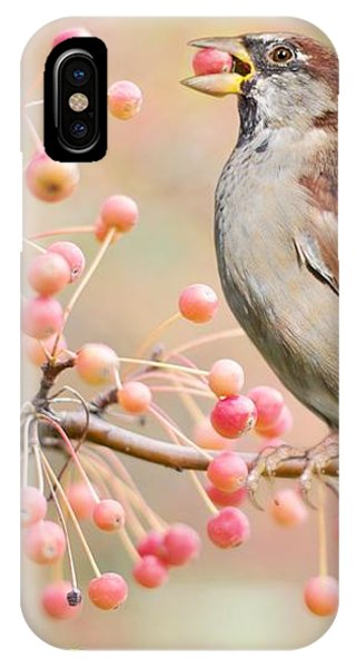 Sparrow Eating Berries IPhone Case
