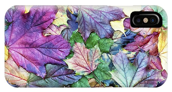 Botany iPhone Case - Special Colored Autumn Leaves by Ninii