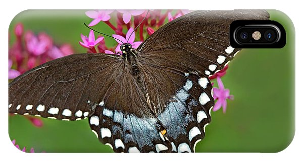 Spicebush Swallowtail Papilio Trollus IPhone Case