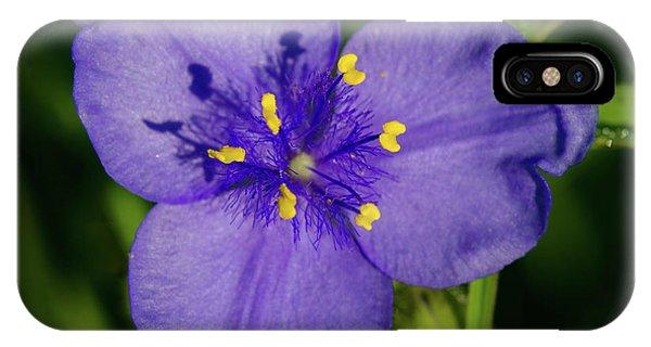 Spiderwort Flower IPhone Case