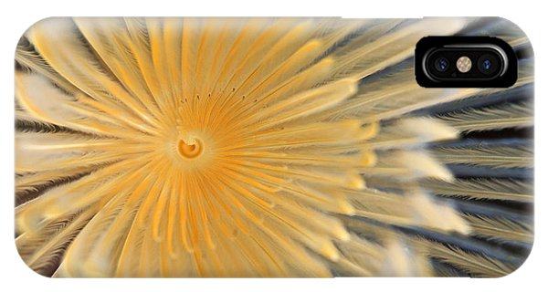 Zoology iPhone Case - Spiral Tube Worm, Schraubensabelle by Scubaluna